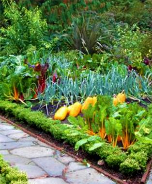 Gardening edible landscaping on pinterest edible garden for Blog jardin potager